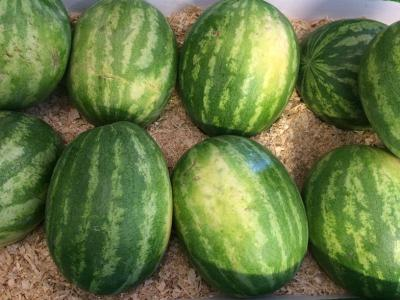 Sweet, juicy, delicious watermelons at Mt. Garfield.